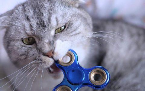 为什么我的猫咪养不熟总是无缘无故咬我,屡教不改?
