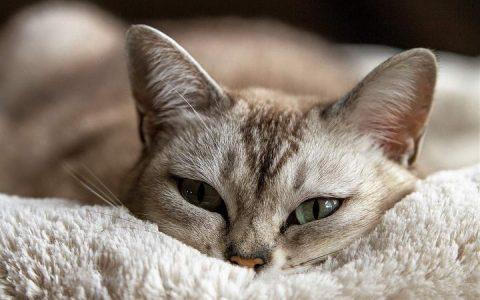 猫咪是近视眼么?有时候食物在它面前都看不到
