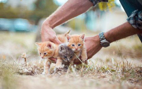 如何能够领养到一只健康的幼猫?猫咪领养前需要观察哪些方面