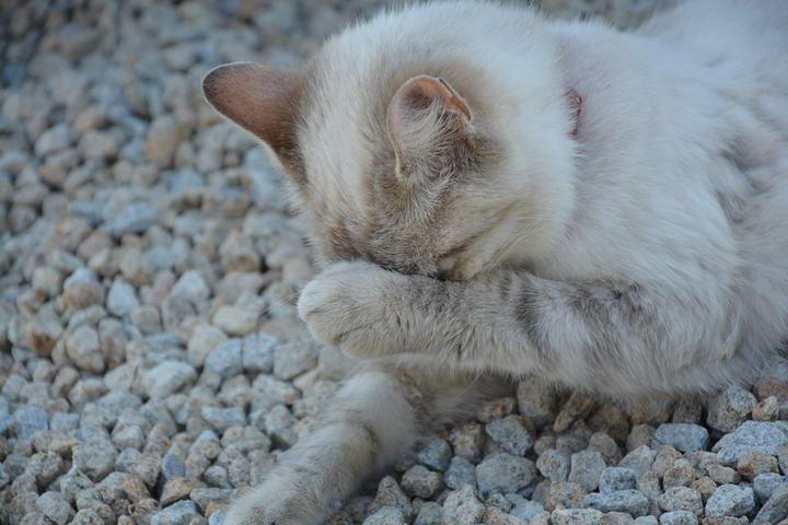 猫咪为什么不爱在猫砂盆中尿尿或者便便?
