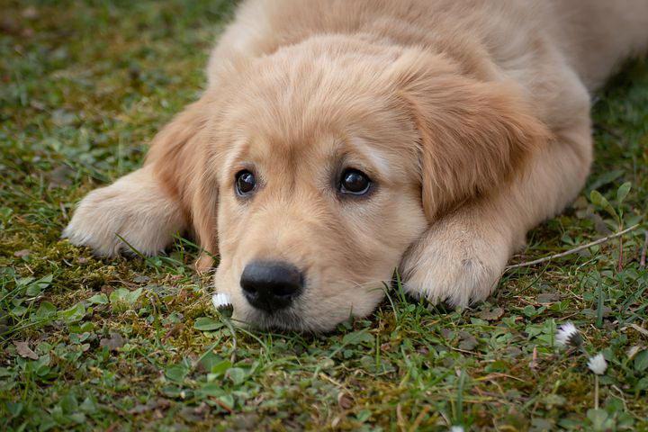 狗狗吃东西噎着了怎么办?