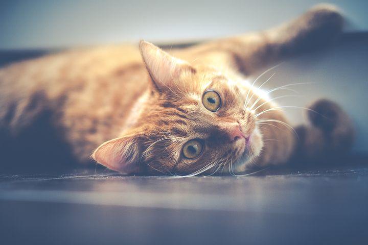 藏在猫咪胡须里的秘密
