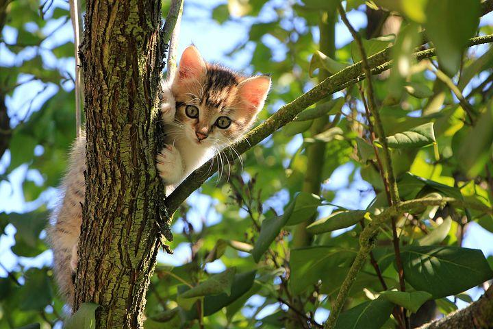 可以带猫咪出门旅游么?