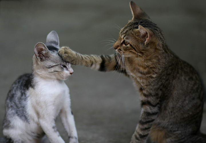 猫咪有哪些打招呼的方式