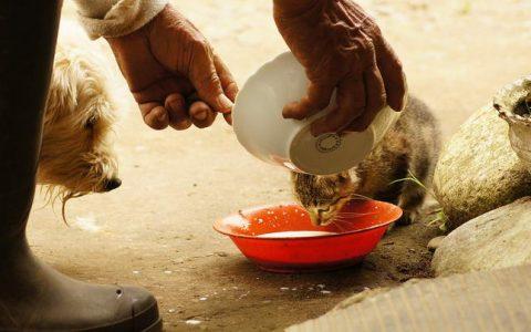 猫咪和狗狗互相吃对方的食物:不可取,可能对健康造成影响