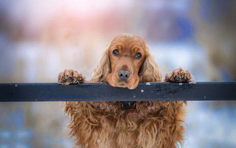 带你了解狗狗唾液腺肿瘤癌症
