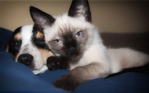 猫咪和狗狗哪一种好养?养猫还是养狗,这是一个问题