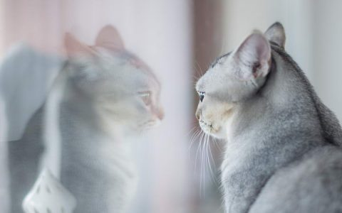 如何让生活在室内的猫咪感到快乐
