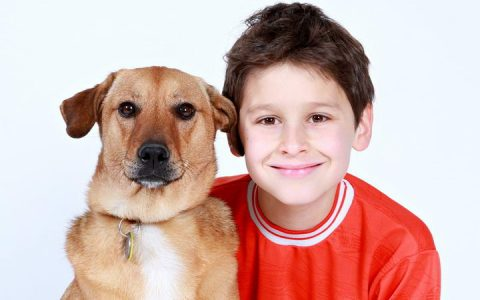 收养成年狗狗有哪些好处?成年犬有哪些优势?
