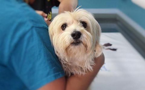 狗狗常见肠胃道症状及疾病有哪些?