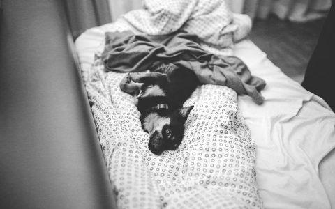 为什么有的时候狗狗会把自己当作是人