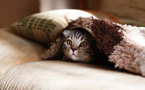 平常高冷的猫咪也会舍不得和主人分开