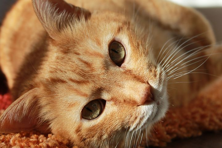 猫咪有哪些可能的压力来源