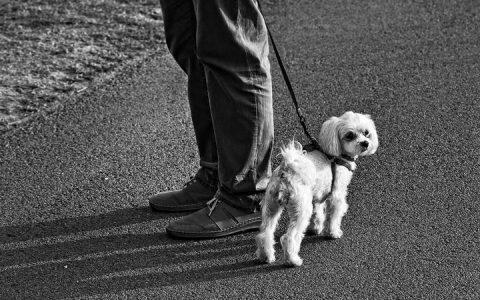 狗狗的哪些行为代表它把你当成唯一主人?