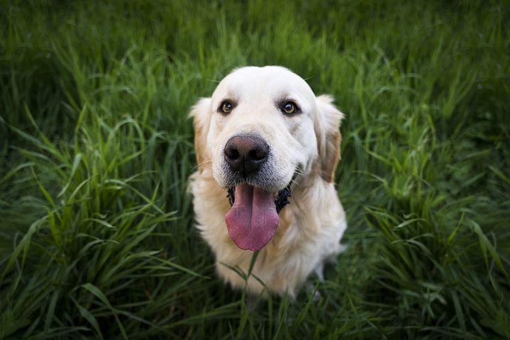 狗狗懂得察言观色一点都不笨