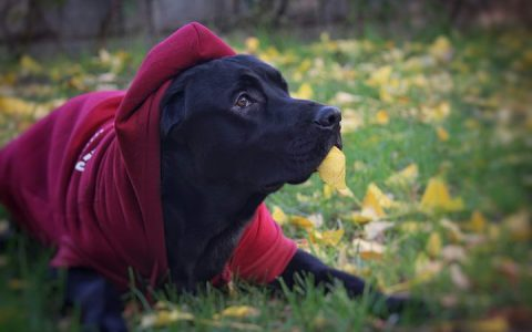 狗狗可以帮助主人从抑郁症中走出来