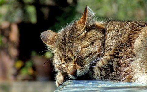猫咪也会做梦吗?
