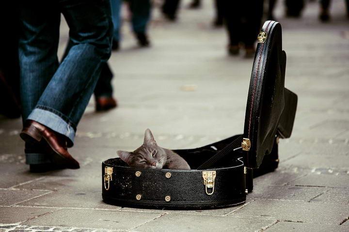 猫咪可以听音乐吗?