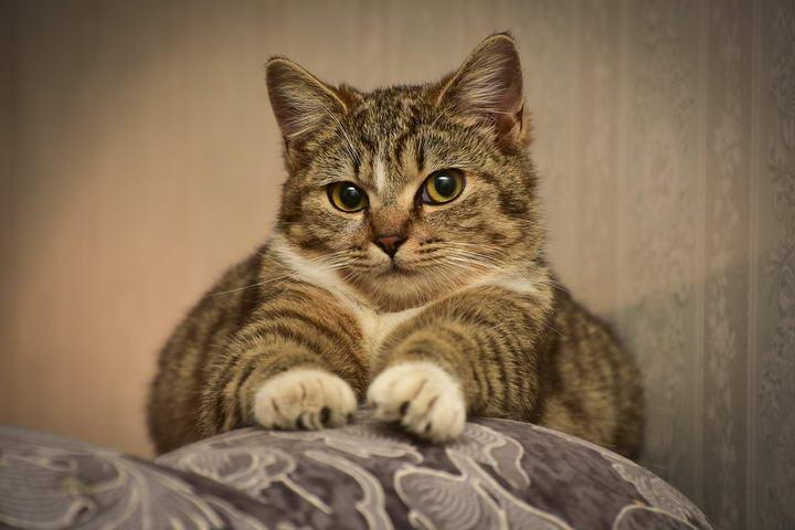 猫咪一直抓沙发怎么办?