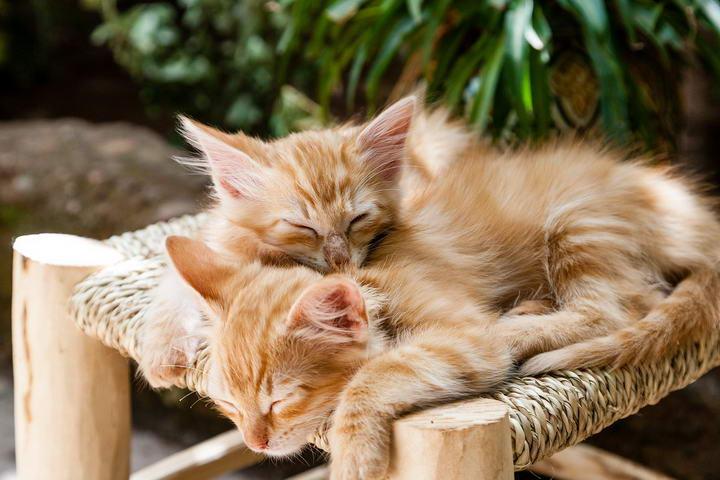 猫咪接种疫苗的重要性