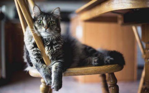如何避免被猫咪抓伤