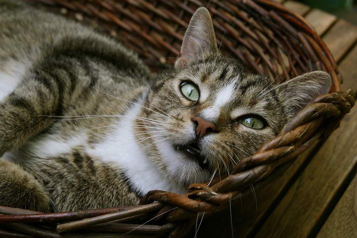 猫咪为什么会喷尿?该如何改善?