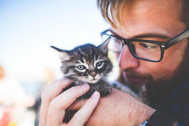 叫猫咪它却不理睬你或者不过来怎么办?