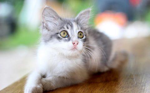 猫咪肠胃炎征兆与注意事项