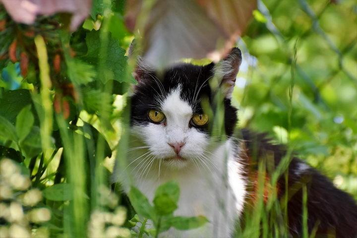 猫咪为什么总是躲起来?这么爱玩躲猫猫?