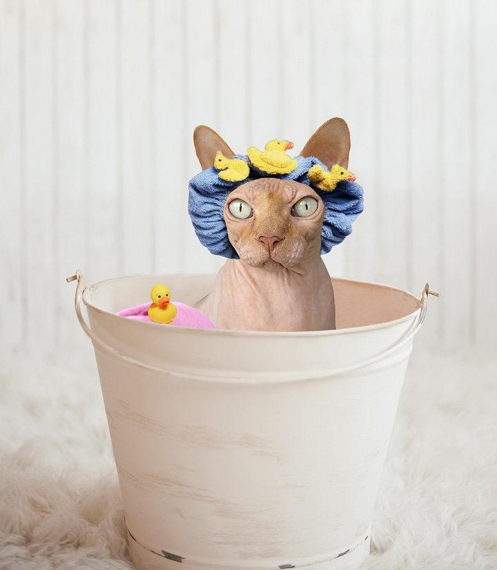 猫咪为什么不喜欢洗澡?