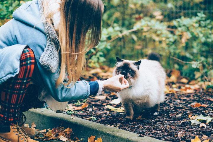 猫咪不吃东西的六大原因