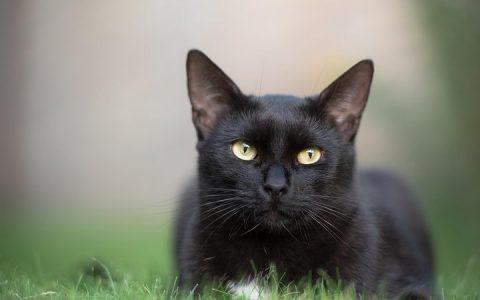 猫咪的皮毛颜色真的可以改变吗?