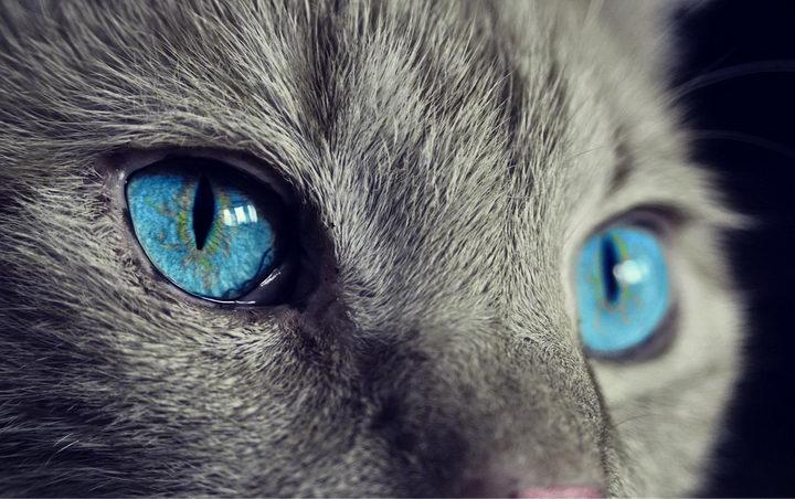 猫咪能够看到颜色么?猫咪的视力如何?猫咪是色盲么?