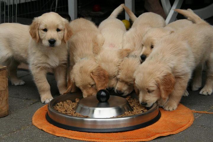 猫粮和狗粮组成成分分析