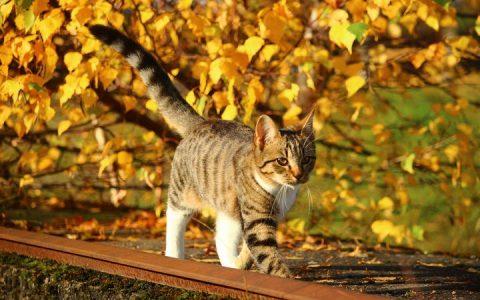 秋冬季节转换需要增强狗狗和猫咪的免疫力