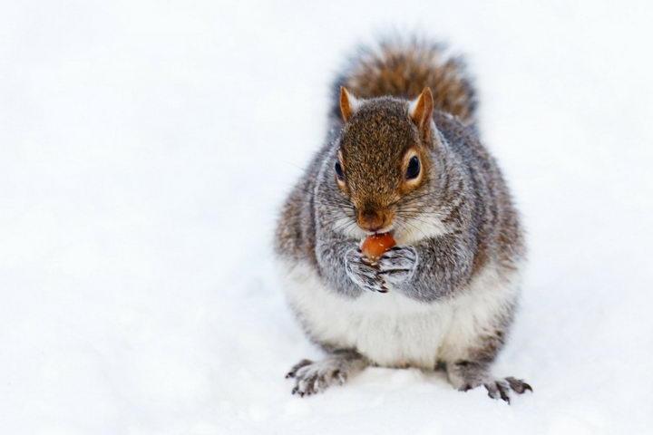 冬天快到了松鼠很忙啦!示意图,非当事松鼠。