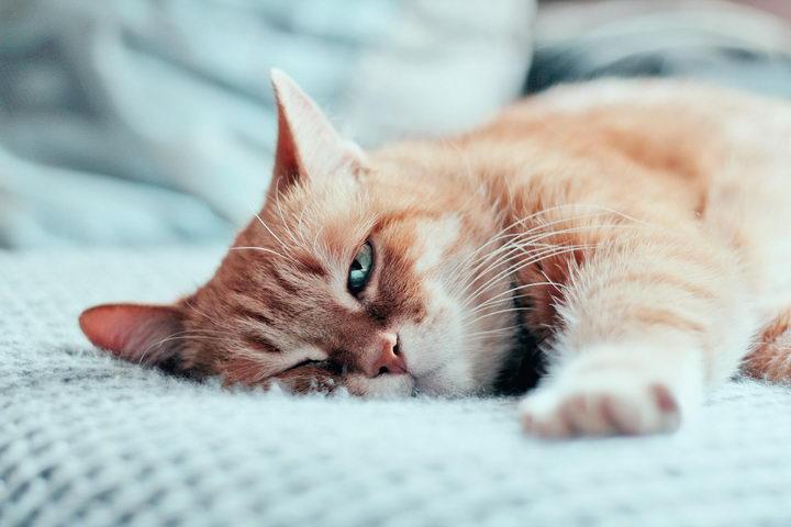 为什么猫咪可以睡一整天?其实它可能只是在打盹
