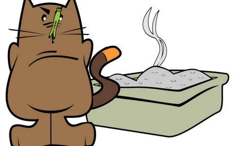要想让猫咪安心上厕所,请不要做这三件事