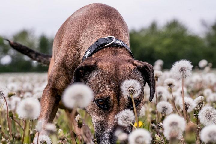 造成狗狗便秘的五大常见原因