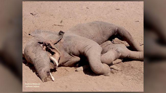 大象将鳄鱼压扁了:一场没有胜利者的战斗