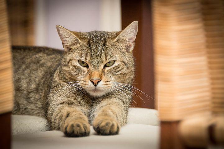为什么猫咪绝育以后还是会到处尿尿