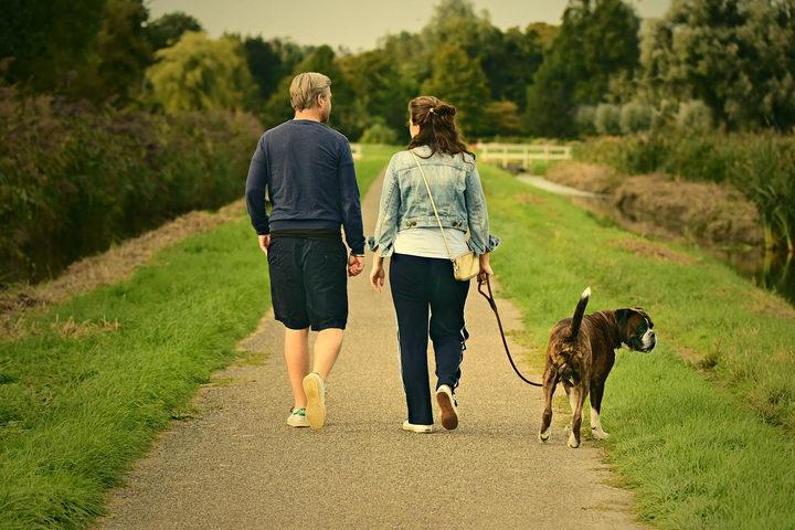 如何训练你的狗狗和自己一起跑步