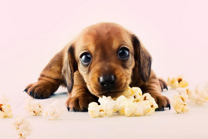狗狗能吃爆米花么?