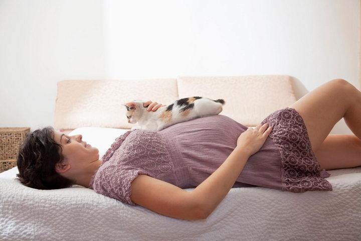 孕妇养猫并不是感染弓形虫病的最主要来源
