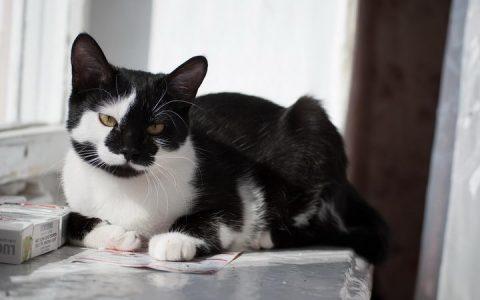 猫咪肝病的症状和照顾