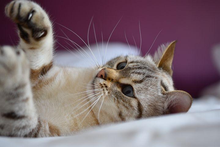 猫咪的动作与叫声到底代表什么意思呢 ?