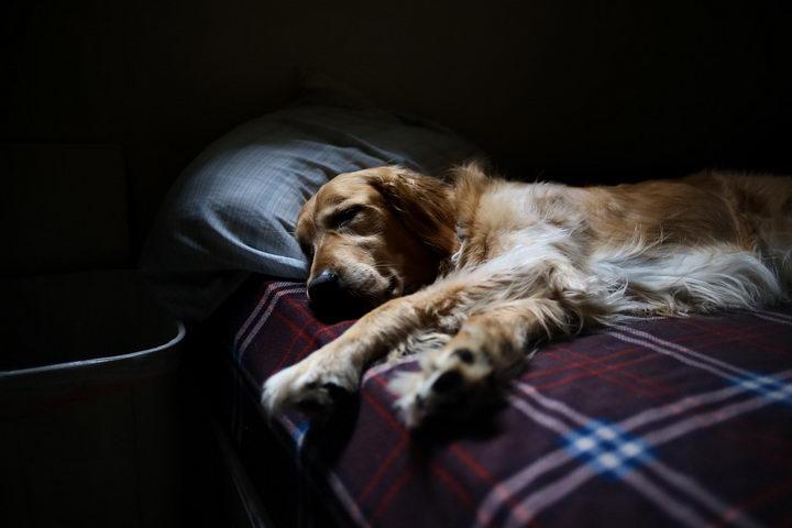 狗狗晚上大半夜的为什么总是吠叫?