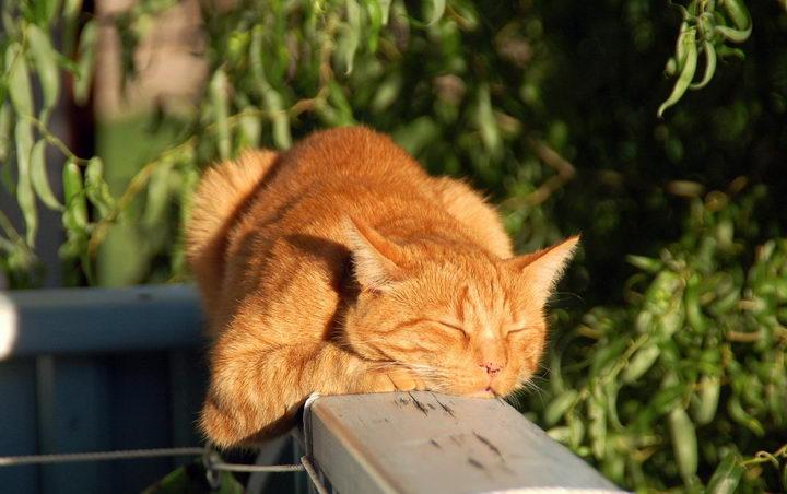 宠物知识:猫咪的正常体温是多少?