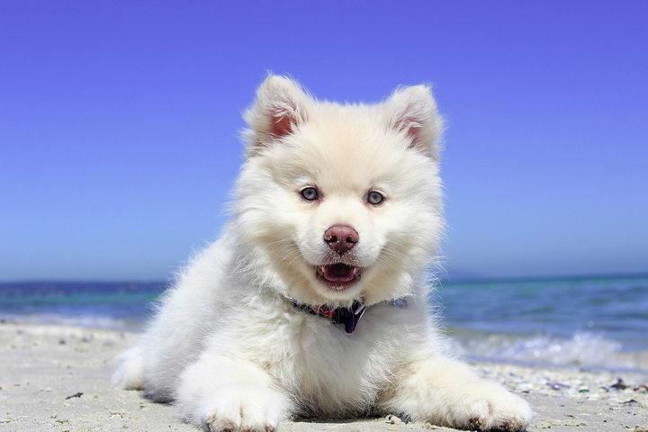宠物知识:狗狗的正常体温是多少?