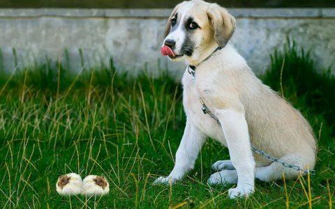 狗狗能吃大蒜么?